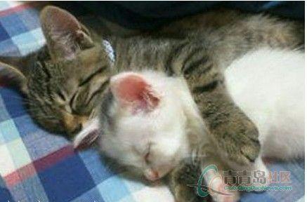 有时候睡觉做到的姿势图表情包库里斗是这种情侣。图片