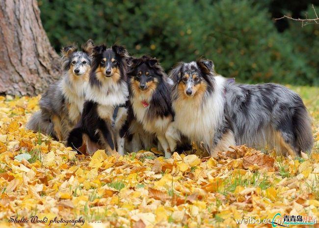 秋季美景 - 静娴 - 静娴的博客