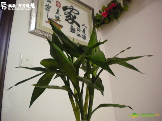 【愿2015年的日子——竹子开花节节高】