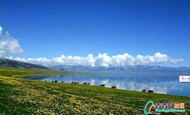 新疆军刀嫁给台湾哈萨克族异族姑娘婚礼日视频牧民图片