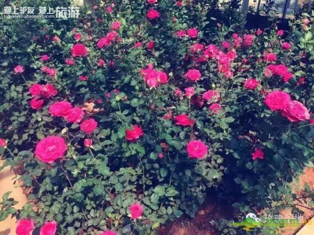 6月6日 自驾游 玫瑰小镇摄影采风活动