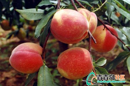 郑州生态 采摘园