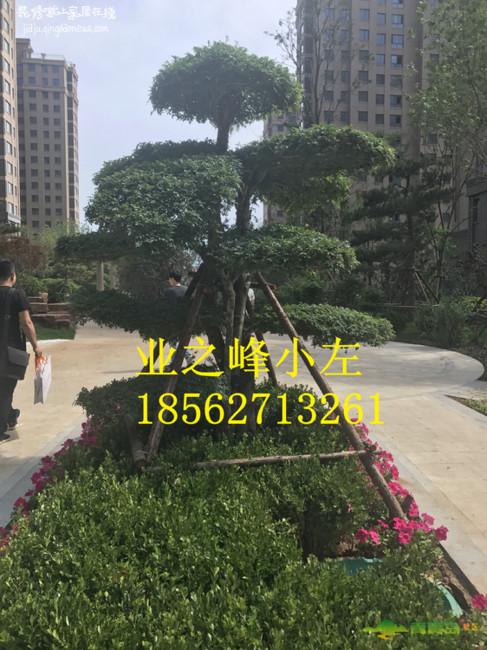 1501094977