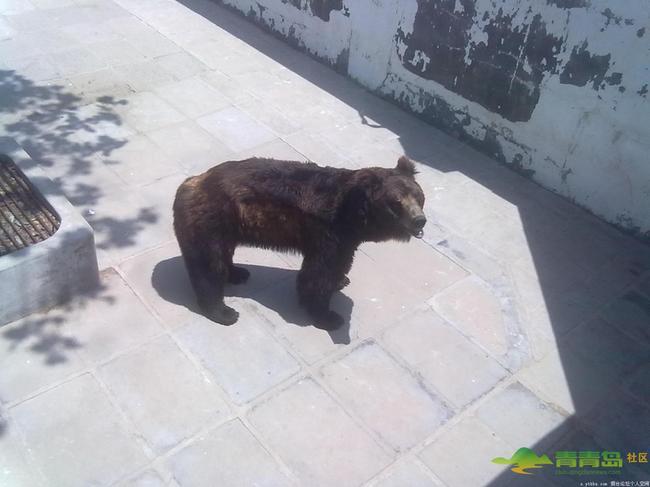 熊猫馆等动物栖息地
