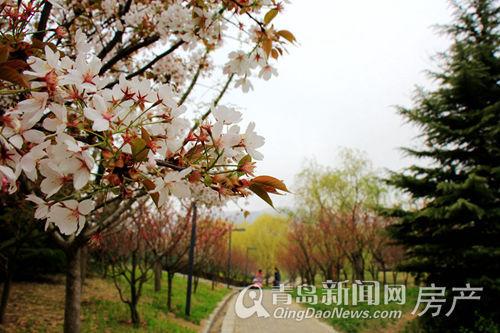 东李,李村河,公园