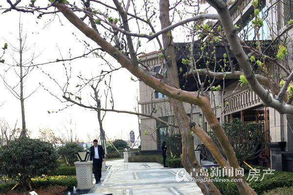 鑫江桂花园三期,城阳,小高层,洋房,改善,青岛新闻网