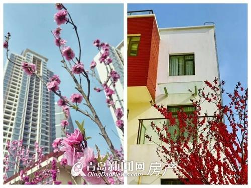 鲁能海蓝金岸,海景房,现房,海阳,龙8国际娱乐官网新闻网