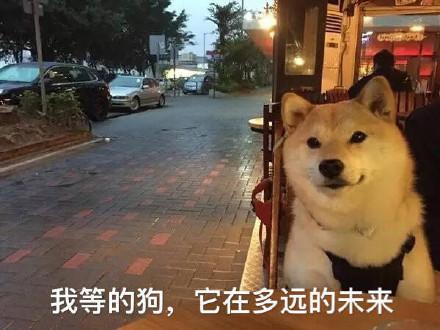 万科泊寓,怦然寓见爱,青岛新闻网