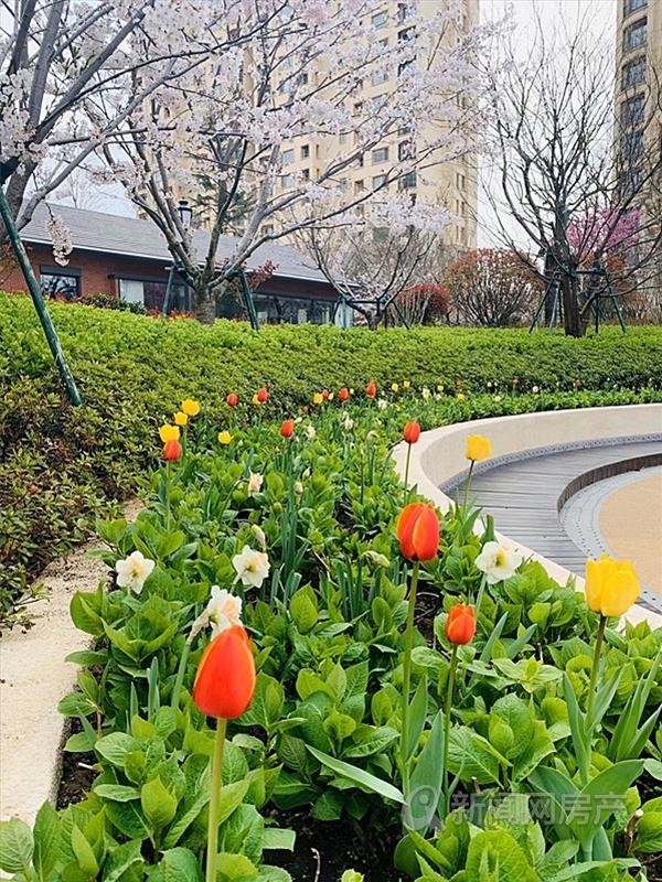 鲁信随珠花园,西海岸,青岛新闻网