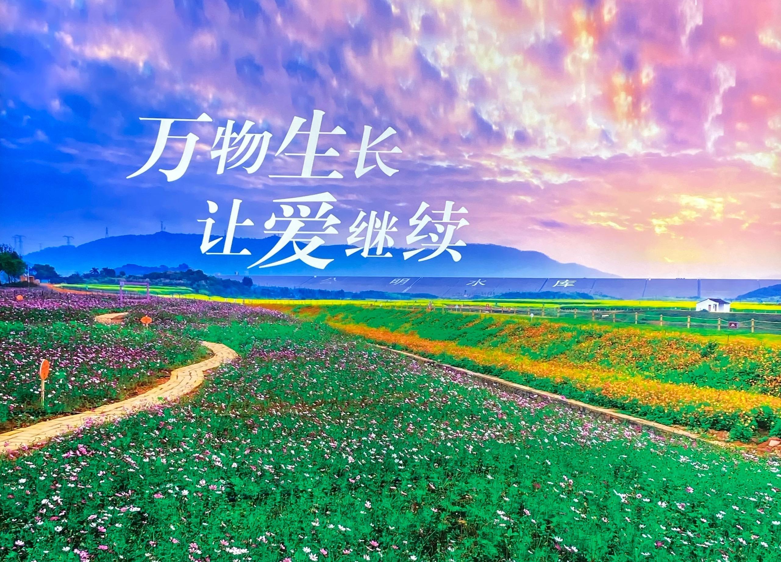 华侨城,深圳,华侨城欢乐莲泉,青岛新闻网